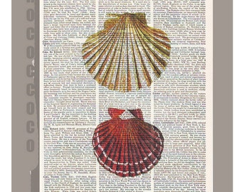 SEASHELL -ARTWORK  printed on Repurposed Vintage Dictionary page 8 x 10 -Upcycled Book Print