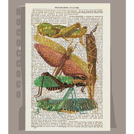 INSECTS 2  -ARTWORK  printed on Repurposed Vintage Dictionary page -Upcycled Book Print