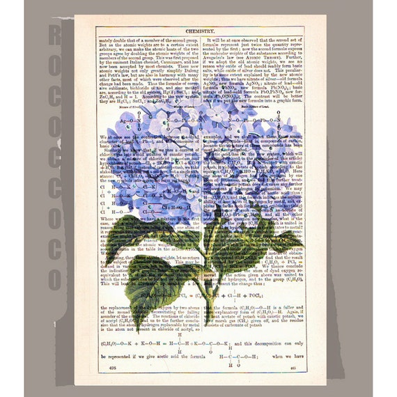 Beautiful HYDRANGEA Artwork on a page from vintage Dictionary -Upcycled Book Print