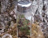Ready-Made Mini Terrarium Shaker Live British Soldier Lichen & Moss Great Gift Idea