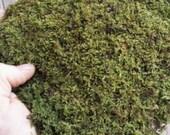 100% Natural Live Feather/Sheet Moss Terrariums, Vivariums, Reptile, Craft
