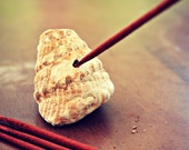 Natural Shell Incense Holder