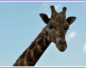 Giraffe Nature Photo Greeting/Note Card or Photograph