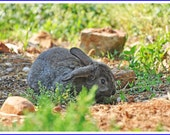 Rabbit Nature Photo Greeting/Note Card or Photograph
