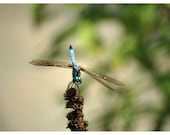 Dragonfly Nature Photo Greeting/Note Card or Photograph