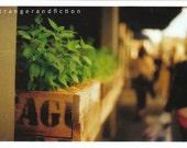 Stranger Print - Box Green  - 6 x 8