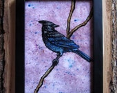 """Steller's Jay Perched in a Pale Fuchsia Background - Framed Mixed Media Original - 7"""" x 9"""""""