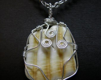Wire Wrapped Maine Sea Shell Pendent Necklace