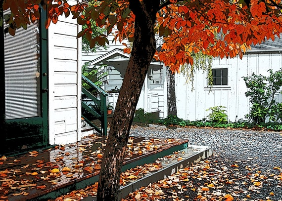 Autumn Tree -  fine art altered photography -  orange tree leaves fall in front white-washed bungalo style house in Sonoma, California.  5x7