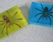ORGANIC Critter Soap - You Pick Critter and Color & Scent- Vegan dinosaur spider frog animal bath