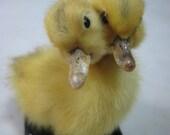 Taxidermy double-headed cute animal duck duckling creepy weird stuff collectible birthday gift