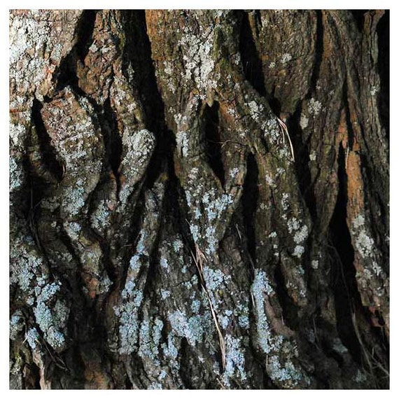 "Tree Bark no.11 - Woodland Nature fine art photography - Archival Print 8"" x 8"""