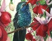 OSWOA Hummingbird and Fuchsias 4x6 inch (10x15cm) botanical  floral watercolor illustration