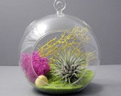Lime // Air Plant Terrarium