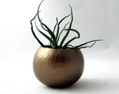 Mini Air Plant Pod with Air Plant // Copper
