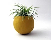Mini Air Plant Container Pod - Mustard Yellow Planter // Vessel // Home and Garden // Gifts Under 20