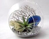 Blue Agate Air Plant Terrarium