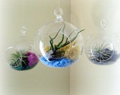 Simple Mini Air Plant Terrariums // Set of Three // Choose Your Colors
