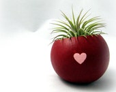 Air Plant Pod - Red & Pink Valentine
