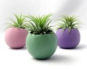 Mini Air Plant Pods - Pastel