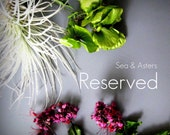 Reserved for Sarah C.