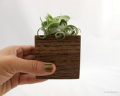 Air Plant Planter Cube - Streptophylla Mocha