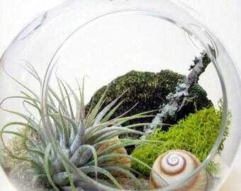 Spiral Air Plant Terrarium