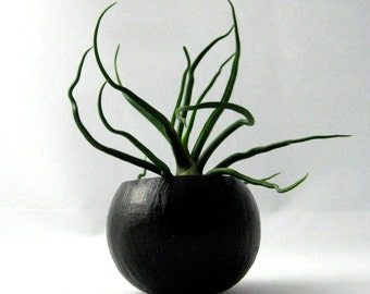 Mini Black Air Plant Pod with Air Plant
