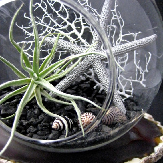 Black and White Air Plant Terrarium