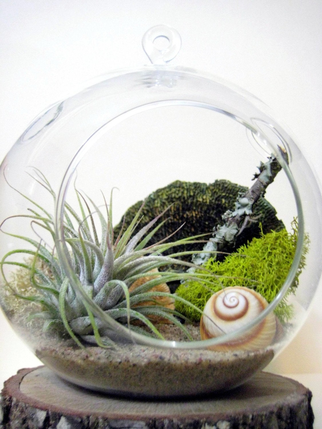 spiral air plant terrarium. Black Bedroom Furniture Sets. Home Design Ideas