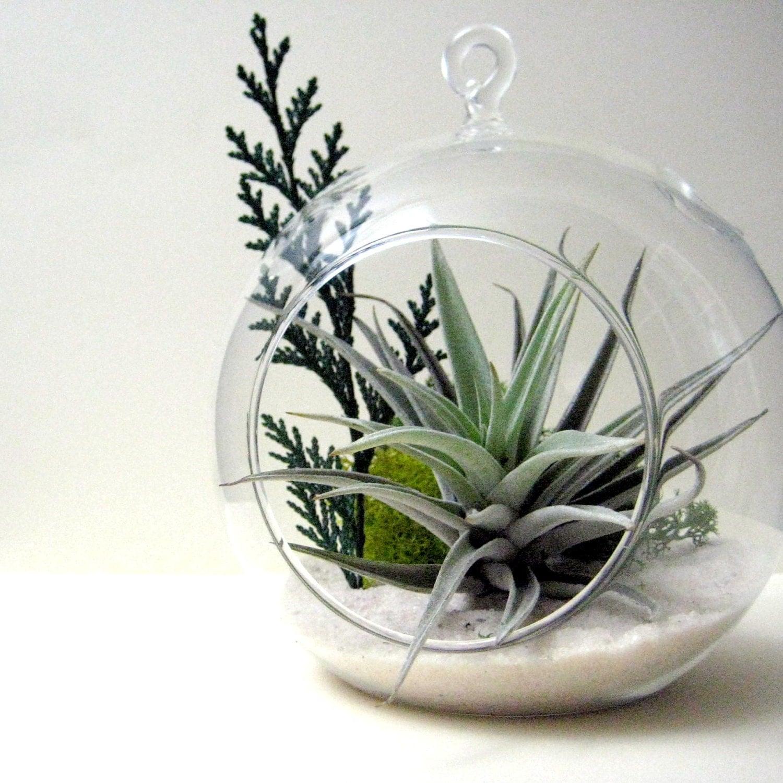 Cedar sprig air plant terrarium for Air plant planters