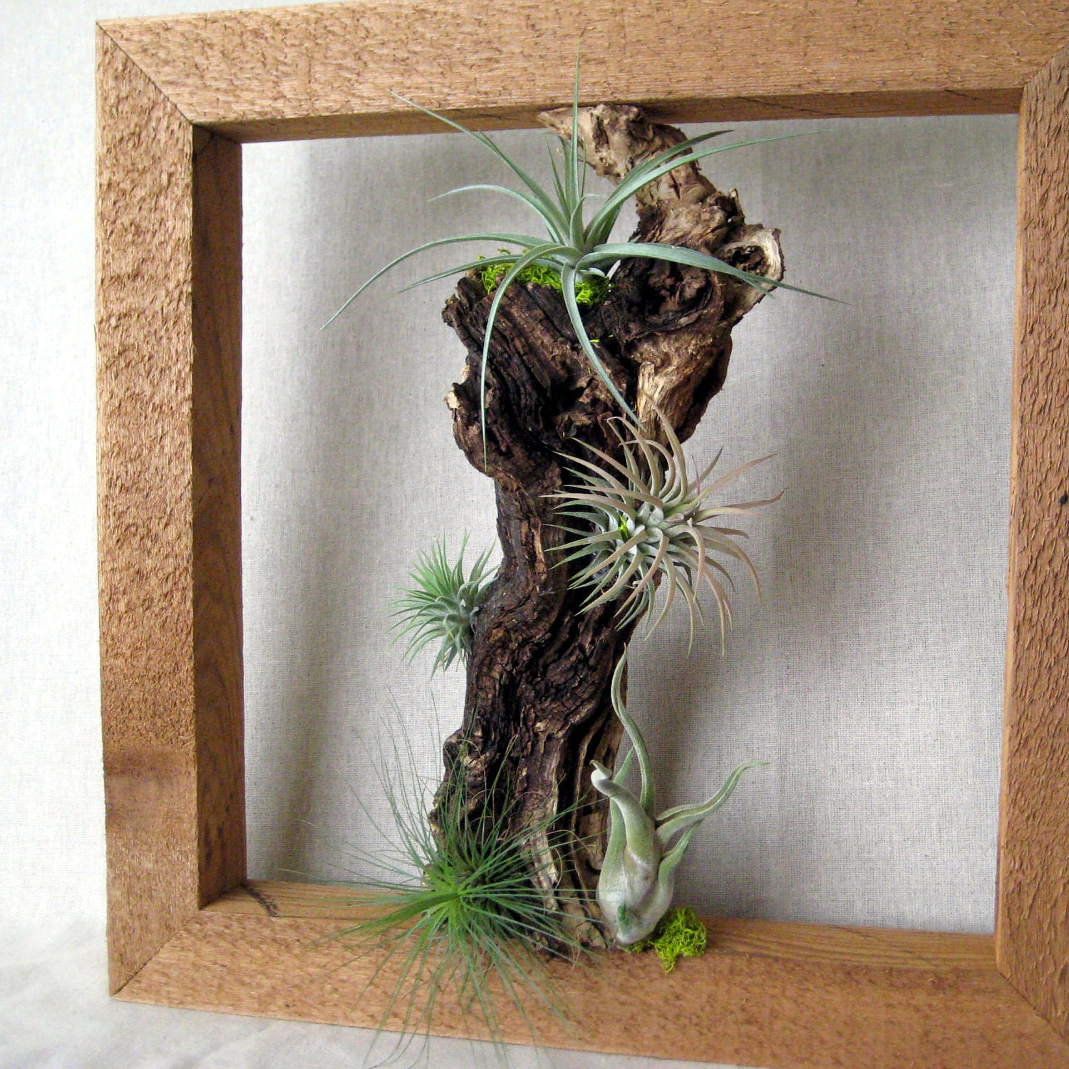 Air Plant Wall Frame I