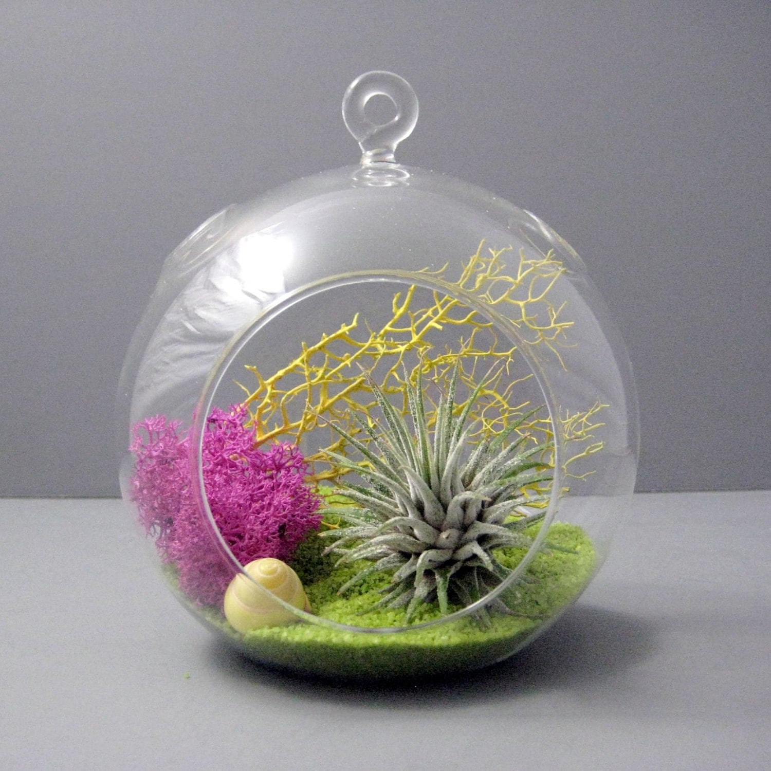 Lime Air Plant Terrarium By Seaandasters On Etsy