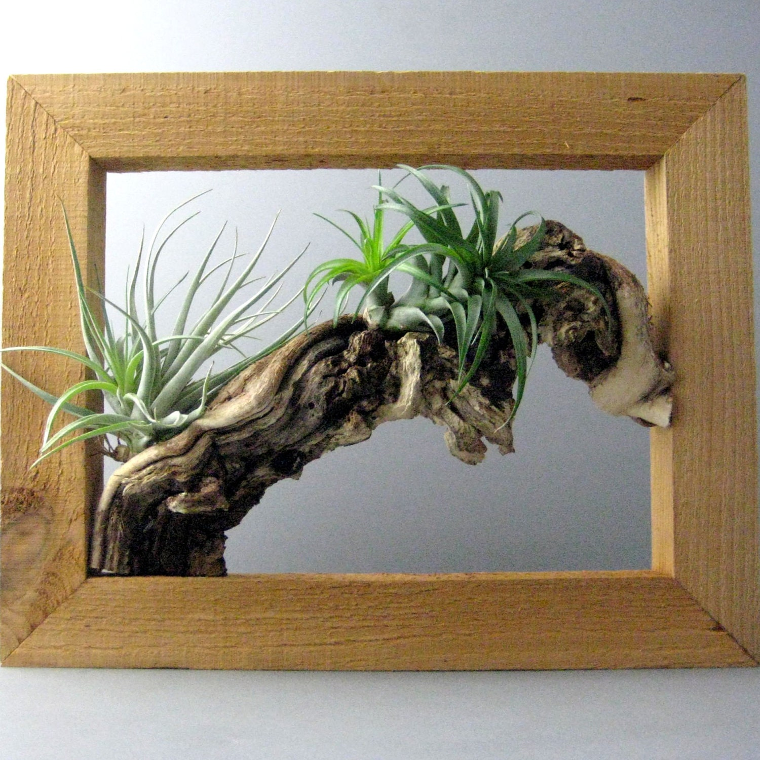 Air plant wall frame for Air plant holder ideas