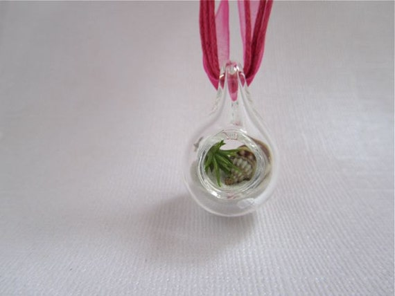 Tiny Pink Beach Pendant Terrarium With Live Air Plant
