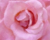 MOTHER'S DAY Flower Painted Pink Rose Blossom, 10 x 10 , Painted Photo Print, Soft Pink Rose Print
