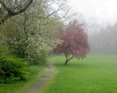 Photograph Cherry Blossom Tree Meadow In The Mist, 12 x 12, Millbrook Meadow, Rockport, MA.  Fine Art Landscape Photograph