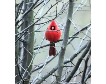 Grumpy Cardinal Card - Angry Bird in a Tree Greeting Card