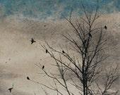February Visit, Doves Strand