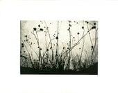 SALE CIJ: Blank notecards, set of 4, original etchings, Moonrise, Charmed Meadow