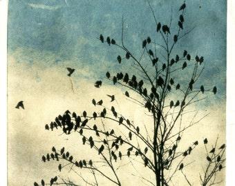 Februray Visit, Doves Dip, print series