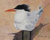 Beach Bird Print, Bird Painting, Tern Bird Wall Art, Coastal Art, Beach Decor, Wildlife Watercolor Art, Shore Bird Art, Florida Bird Art