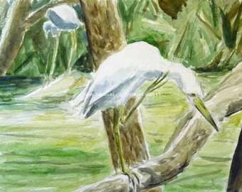Little Blue Heron at Morris Arboretum