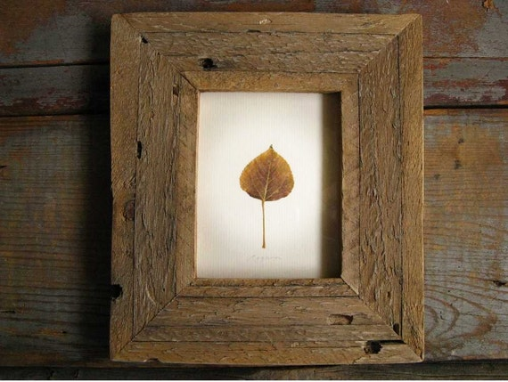 Tarnished Aspen-- Leaf Framed in Aged Pine
