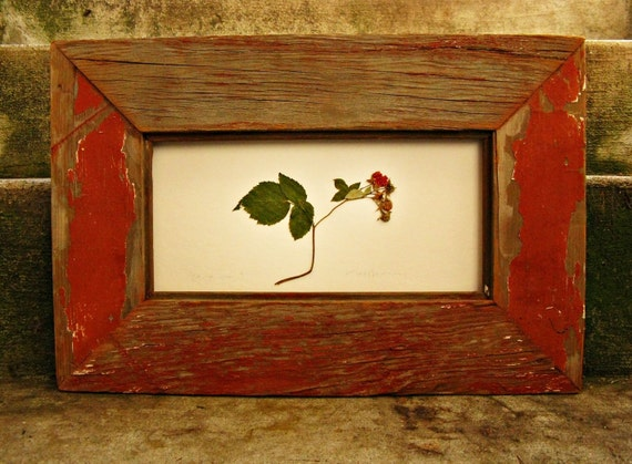 Bare Root Raspberry ---preserved in red barn wood