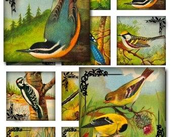 Vintage Birds Squares Instant Download 1 and 2 Inch Resin Glass Scrabble Tile Pendants JPEG (12-22)