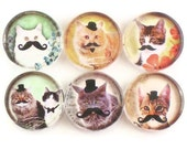 Magnets, Cats with Mustaches  Set of  Six