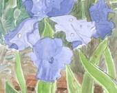 Irises and Poppies