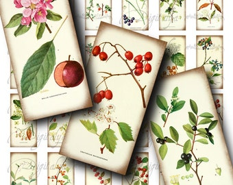 Herbarium Berries (2) Digital Collage Sheet - 30 Dominos 1x2 inch or Bamboo size for resin pendant and mixed craft - see promo