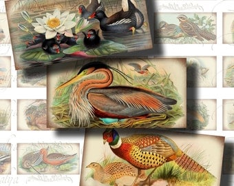Antique Birds (3) Digital Collage Sheet - Ancient colorful bird on Old Paper - 30 Domino 1x2 inch for pendants, magnets, craft